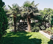 The green garden with palms under the apartments