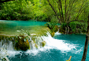 Plitvice park and its virgin forest